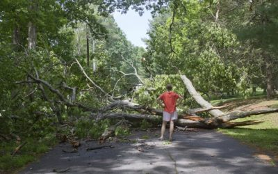 Storm damage along Bruce Road 13